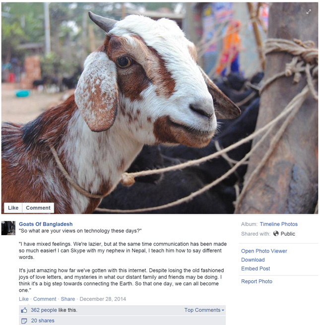 'The whole world loves them,' says creator of Goats of ...