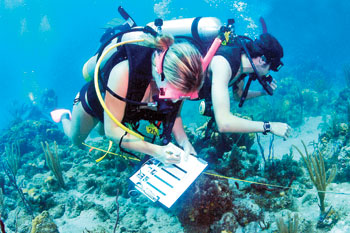 Learn Interesting Facts And Information About What Is A Marine Biologist Do They As Part Of Their Job Read Our Description
