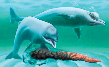 Mini Dolphin   Toothless Dwarf Dolphin A Case Study In Evolution Back Page