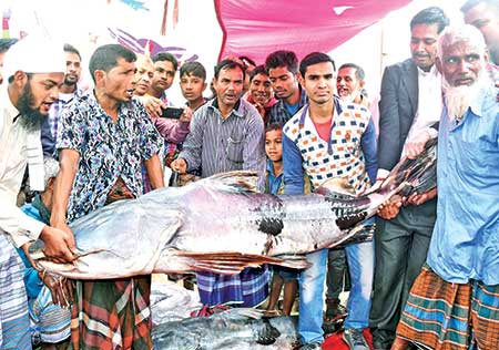 The photo shows people holding a 100-kg bagair (dwarf goonch) fish, which has been brought to the historical Poradaha Mela in Bogra for sale on Wednesday.     photo: Observer