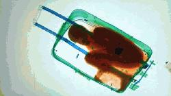Father of boy found in suitcase freed