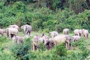 Experts concerned as 64 elephants trapped in Ukhia