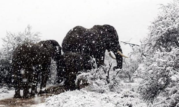 A cold front in South Africa last week saw snow fall across parts of the country. Photo: The Guardian