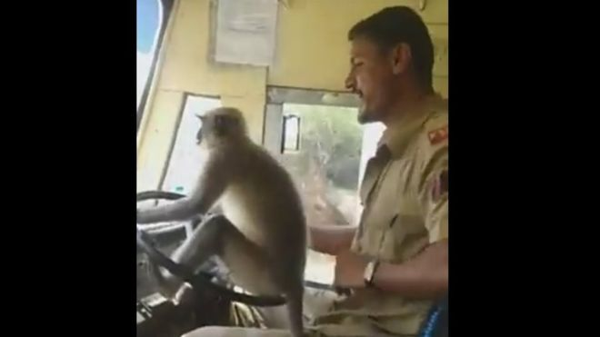 Indian driver suspended to let monkey