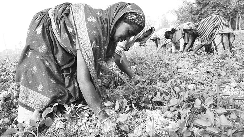 Empowering women in agriculture sector