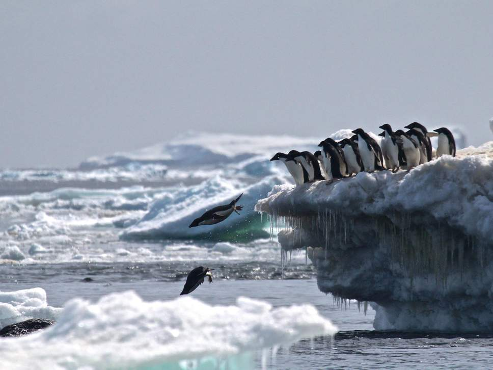 The deal would have protected wildlife such as these Adelie penguins, as well as whales and seals ( University of Oxford )