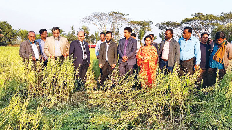 A field day on mustard crop was held at Paschim Saheb Nagar Village in Mirzanagar Union under Parshuram Upazila of Feni on Monday. DC Md Wahiduzzaman was present at the programme as chief guest.	photo: Observer