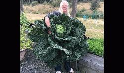 Couple grows giant vegetable