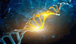 Study uncovers genetic switches that control process of whole-body regeneration