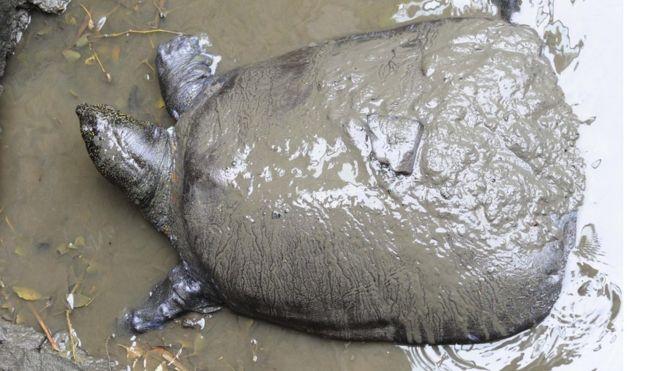 One of world's rarest turtles dies