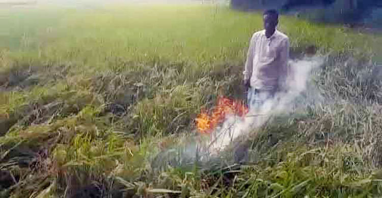 PM asks to probe torching paddy field by farmers