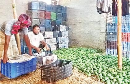 Mango business gains momentum at Porsha