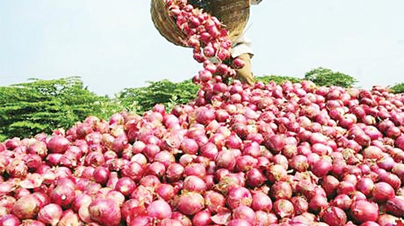 Onion price doubled in a week