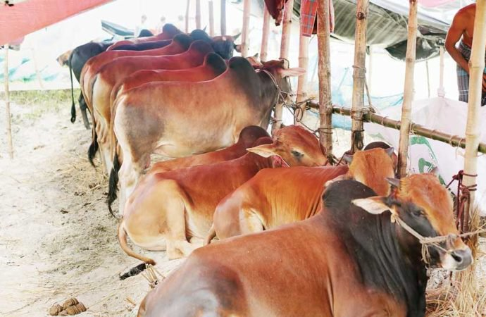 Cattle from India not allowed before Eid-ul-Azha