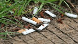 Cigarette butts in soil hamper plant growth