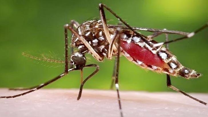 Construction worker dies of dengue in Rajshahi
