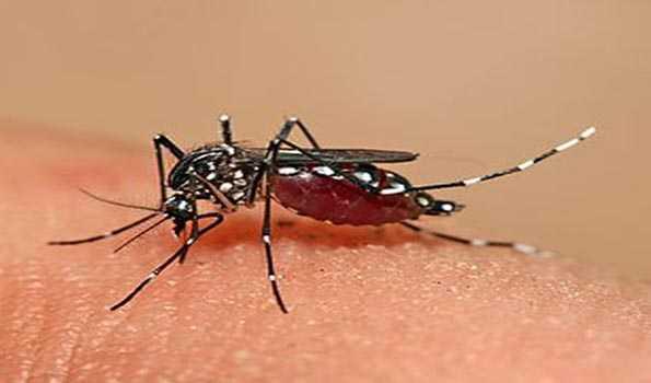 Another dengue patient dies in Barishal