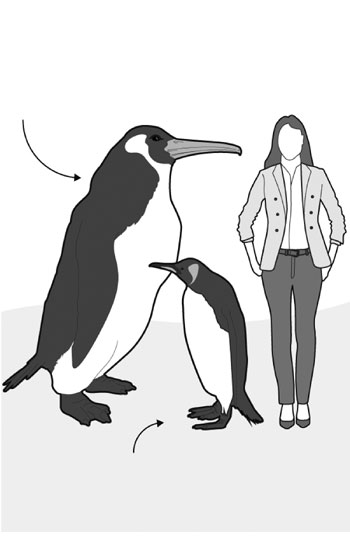 Human-sized penguin fossil discovered in New Zealand