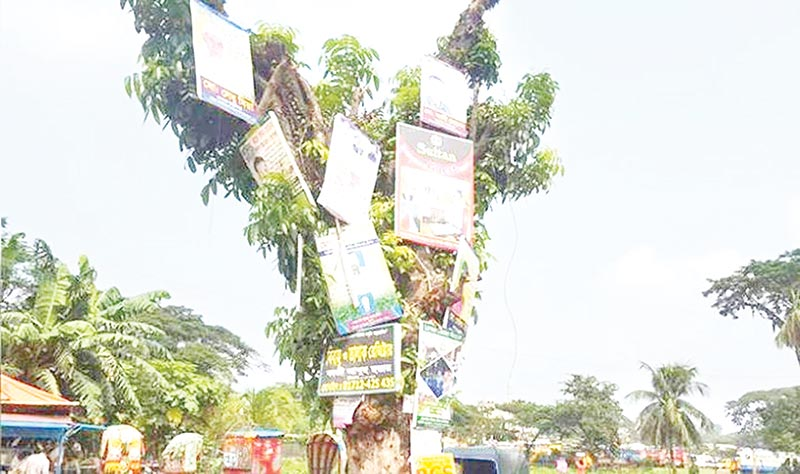 Roadside trees being used for hanging ads in Noakhali