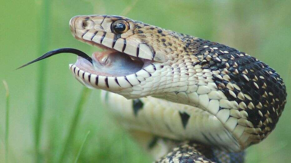 Youth dies from snake bite in Bhola
