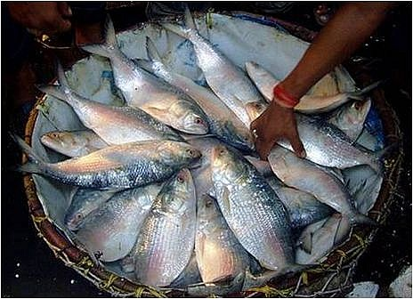Hilsa fishing banned for 22 days from Oct 9