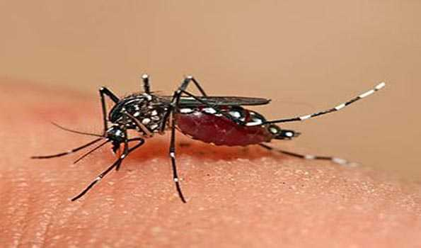 4 die of dengue; 634 new infections recorded