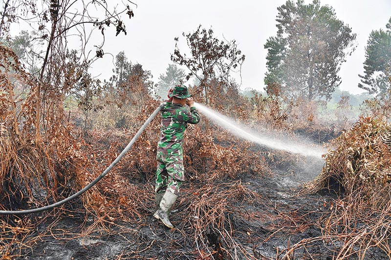 An Indonesian soldier sprays water to help extinguish a fire in the Kampar regency in Indonesia's Riau province on September 12. The number of blazes in Indonesia's rainforests has jumped sharply, satellite data showed on September 12, spreading smog across Southeast Asia and adding to concerns about the impact of increasing wildfire outbreaks worldwide on global warming.	photo : AFP