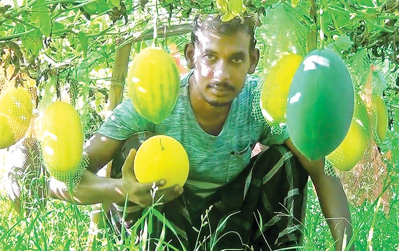 Sourav gets success in farming year-round watermelon