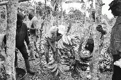 African banana producers urge EU to maintain tariffs on Latin American imports