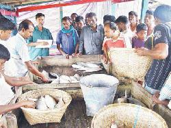 Tk 6cr hilsa goes to different districts daily from Char Fasson