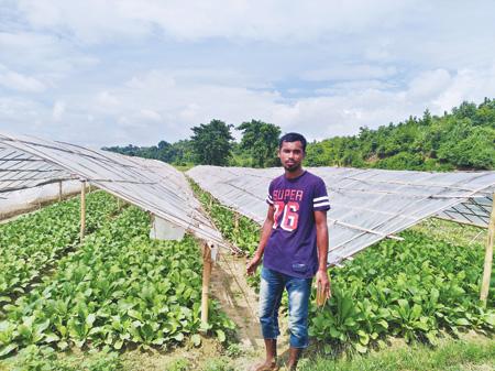 Shah Jalal of Dighinala successfully farming radish under polythene shed