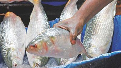 9 Faridpur fishermen jailed for catching hilsa