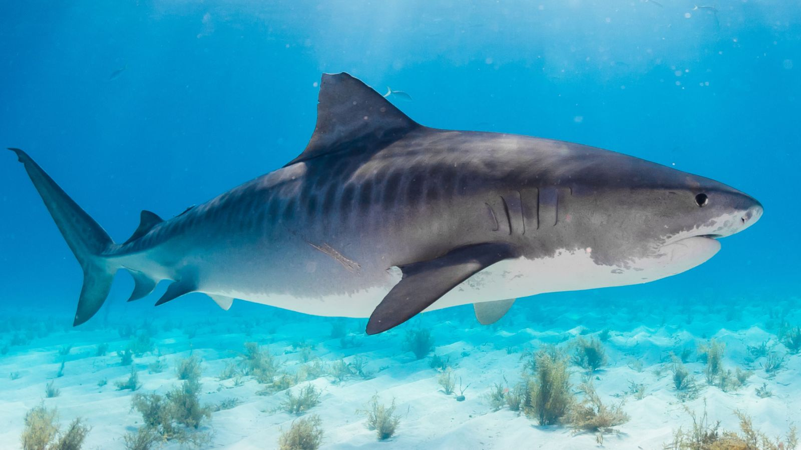Missing tourist's hand found in shark's stomach