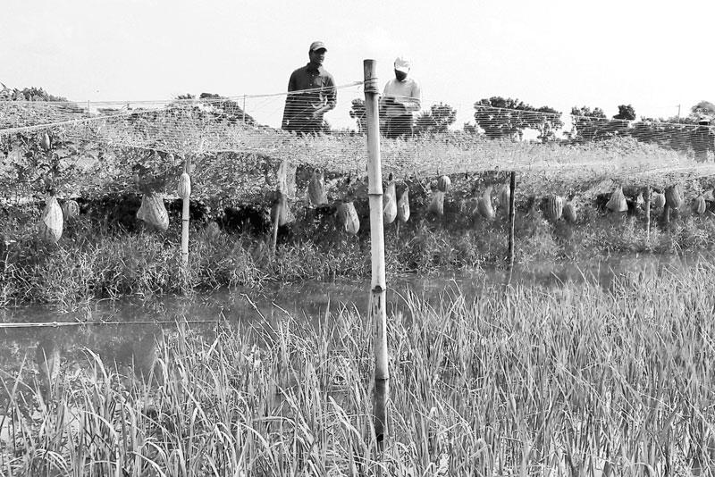 Multi-layer farming gaining popularity in coastal areas