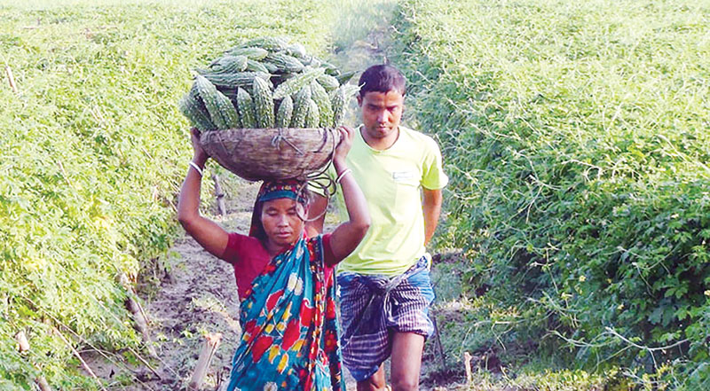 Thakurgaon vegetables going abroad after meeting demand