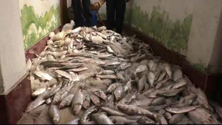 40 maunds of jatka seized in Bhola