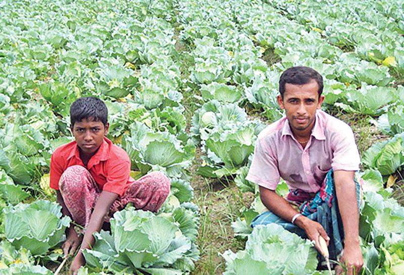 Pateldangi known as 'vegetable village'