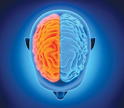 Researchers were not right about left brains, study suggests