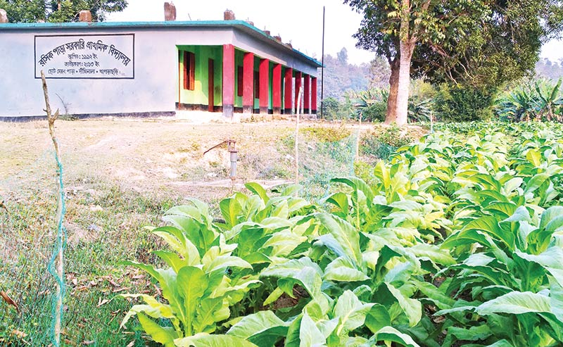 Tobacco plants affect school students at Dighinala