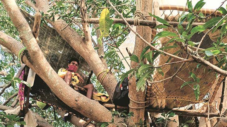 Quarantine on mango tree!