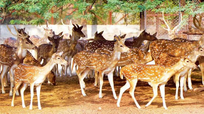 Hungry dogs consume four deer alive in Rajshahi zoo