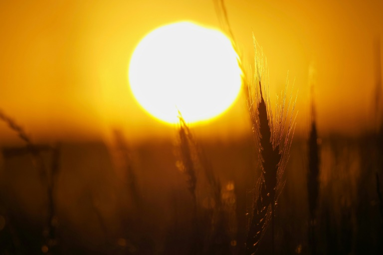 Several statistical studies have shown a slight correlation between climate and the novel coronavirus -- the hotter and more humid it is, the less likely the virus is to spread -- but the findings remain preliminary. Photo: AFP
