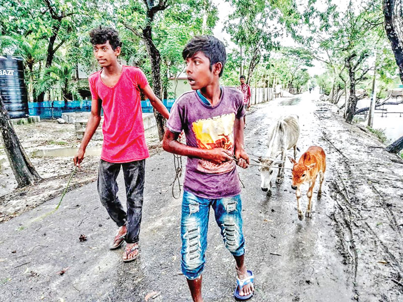 Inset, The very look on the faces of the two boys, dragging their cattle to a safer place after the cyclone hit the district on Wednesday evening, suggests the terror that gripped the        inhabitants of the area at the enormity of the storm.PHOTO: OBSERVER