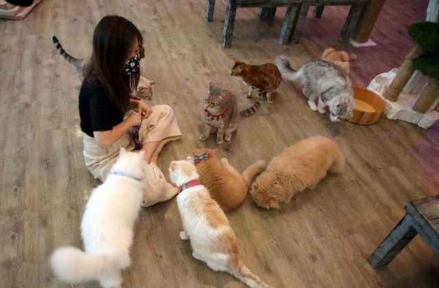 A customer plays with cats to find comfort at the Caturday Cat cafe after the government started opening some restaurants outside shopping malls, parks and barbershops, during the coronavirus disease (COVID-19) outbreak in Bangkok, Thailand May 7, 2020. Photo: Reuters