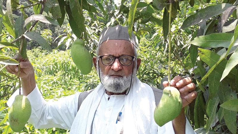 An Indian farmer Haji Kalimullah Khan had grafted a new variety of mango, which he named after world's legendary batsman Sachin Tendulkar 'Sachin Mango' some few years ago. photo: Courtesy