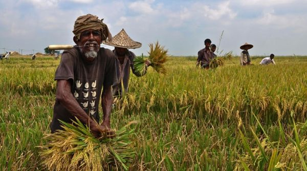 Farmers incur Tk 56,536 crore losses due to coronavirus lockdown