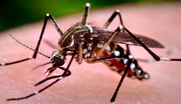 Dengue: Combing operation against mosquitoes from Saturday