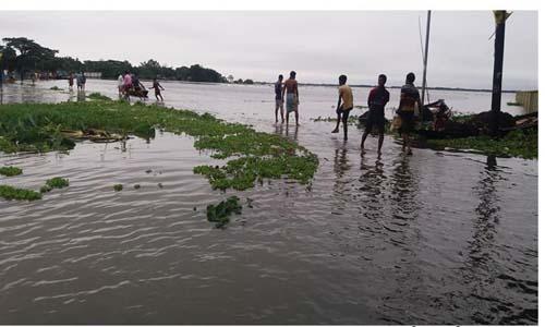 Vast land flooded in Netrakona