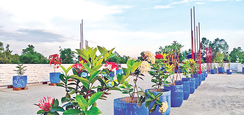 Rooftop gardening is in vogue in the capital. The photo was taken on Wednesday.	photo : Observer
