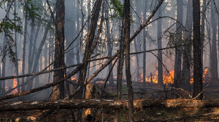 Forest fire in central Yakutia in early June